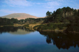 Lake and Woods, Brecon Beacons