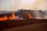 Burning back Grasslands, Kwazulu Natal