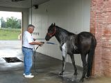 Mr. Ed says to make sure and get his undercarage.