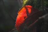 Leaf on fire.........