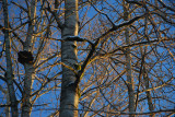 Light playing in the branches..........