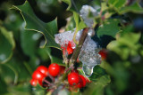 Cold berries.........