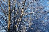 Light & snow...........