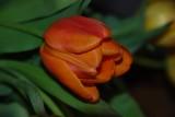 A good day for Tulip photos.........