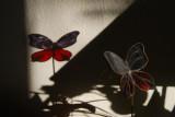 Shadow play...........