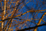 Branches of light...........