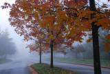 A little fog........a little color.