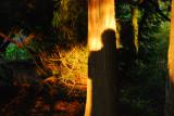 A tree's shadow.........