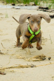 This Is When I Was  A Puppy 4