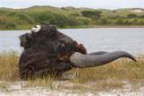 Pleistocene zoogdieren