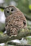 Birds  Owls