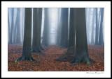 *** Mystic Woods ***