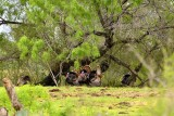 _APR3484 Spring gobblers; 2013