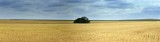 APR3394-Amber waves of grain; 2013