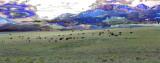 Buffalo Magic: Wolf River Ranch