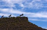 Wild Horse Monument detail