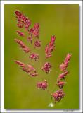 Colourful wild grass.