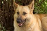 My Farm Dog