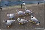 A Six-Pack of Quack