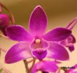 104_0403 Orchidée_PB.jpg