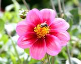 IMG_3380_Au Jardin botanique PB.jpg