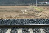 tracks next to ¿îõ¿ª