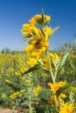 flower in wind