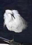 Egrette