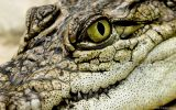Reptiles Batraciens Poissons / Reptiles Fishes