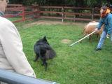 1st Herding Experience