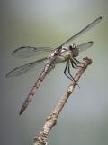 Dragonfly04.jpg