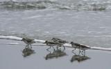 Myrtle Beach Joggers
