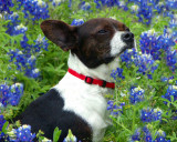 03 25 07  BOWZER & the Blue Bonnets 4, A1.jpg