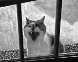 04 19 07  Vampire cat, D40 18-200 vr lens 1600 ISO.jpg