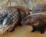 05 25 07 Ellen Trout Zoo, Lufkin, TX,  D50  tamron 18-250.jpg