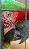 05 25 07 Detail shot of Parrot,  Ellen Trout Zoo, Lufkin, TX,  D50  Tamron 18-250.jpg