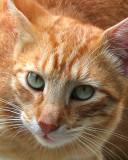 07 12 07,Kitty, Canon A630.jpg