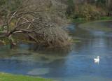 02 13 05 San Marcos River 2, Minolta A1.jpg