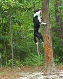 07 0 07 Troubles climbing tree, Minolta A1.jpg