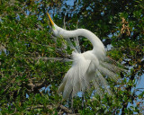 St Augustine Rookery