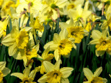 Sea of yellow.jpg