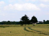 Field 2