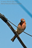 Back yard bird feeder