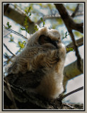 Baby Owlet - Day 2