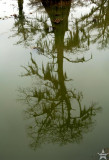 Murky Reflection