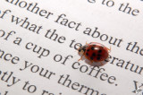 Coffee and  Ladybug