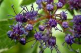 Summer Flowers 14