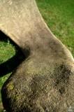 Cement Worm