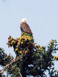 day1-hike-bald-eagle-1.jpg