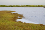 Northwest Point Pond Nature Reserve